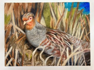 Antje Majewski: The partridge (perdix perdix), 2020